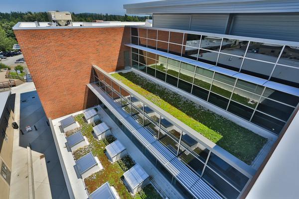 Solar Panel / Green Roof
